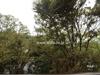 バルコニーからの眺め(南東方向)[平成30年9月12日撮影]