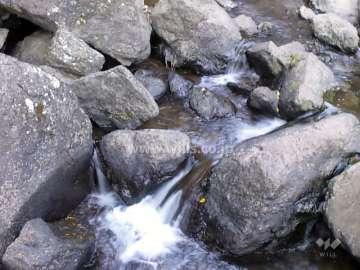 滝道(箕面大滝に至る散歩道)5