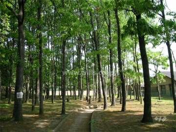 箕面西公園6
