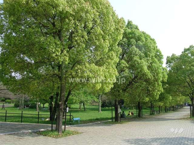 千里中央公園1