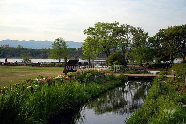昆陽池公園1