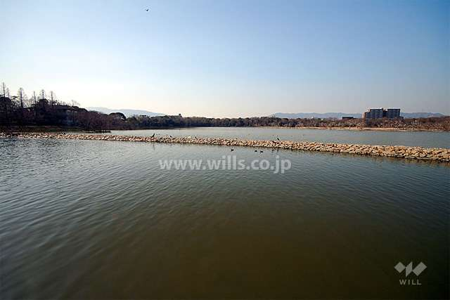 昆陽池公園2