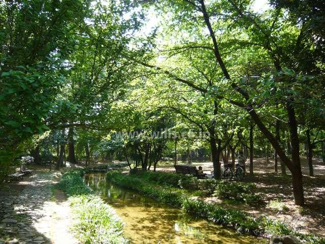 昆陽池公園9