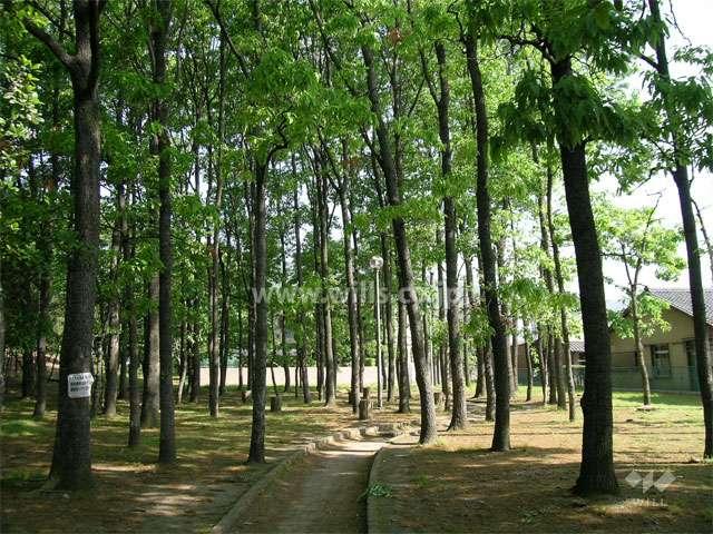箕面西公園7