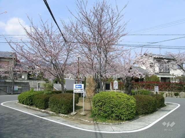 呉羽の里の桜並木(旭丘)1