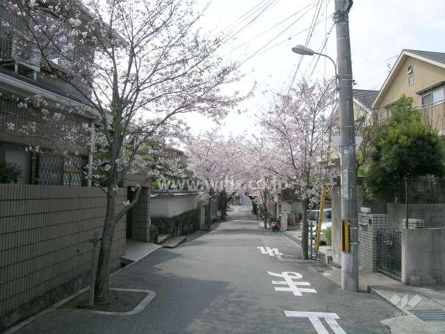 呉羽の里の桜並木(旭丘)2