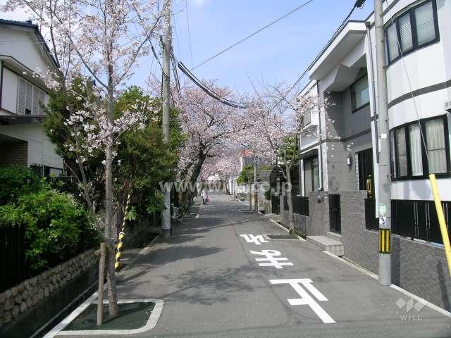 呉羽の里の桜並木(旭丘)6