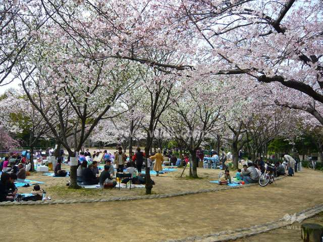 近松公園6