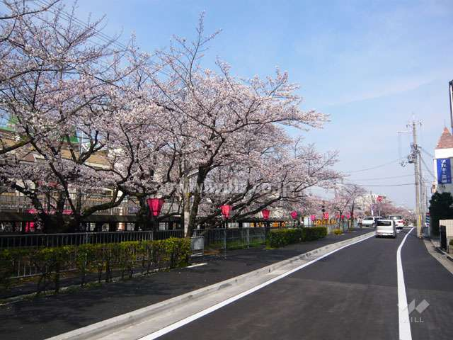 「武庫之荘」駅前の桜並木2
