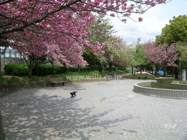 西脇公園4