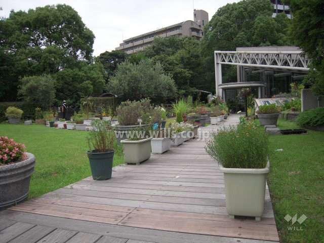 江坂公園6