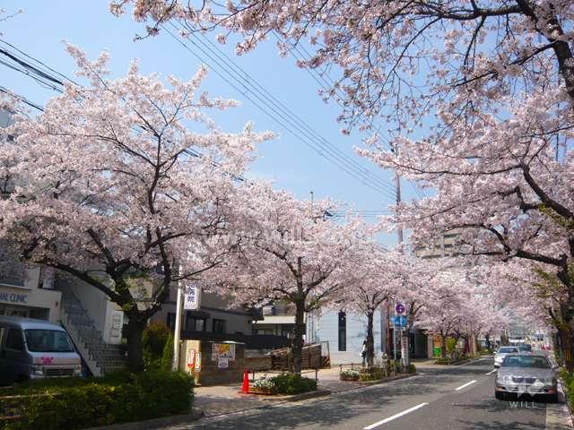 茶屋之町の桜並木1