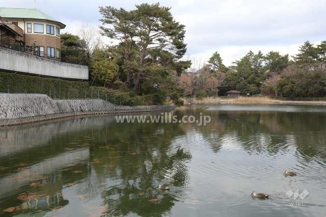 仲ノ池緑地公園2