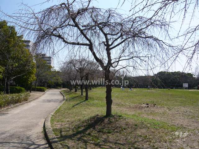 鳴尾浜臨海公園(北地区)8