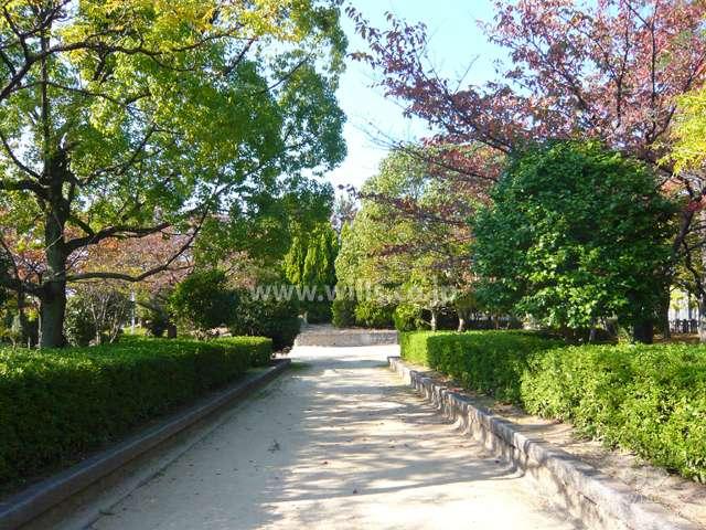 上の池公園10