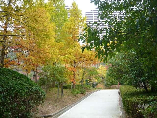 すみれガ丘中央公園4