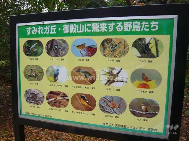 すみれガ丘中央公園6