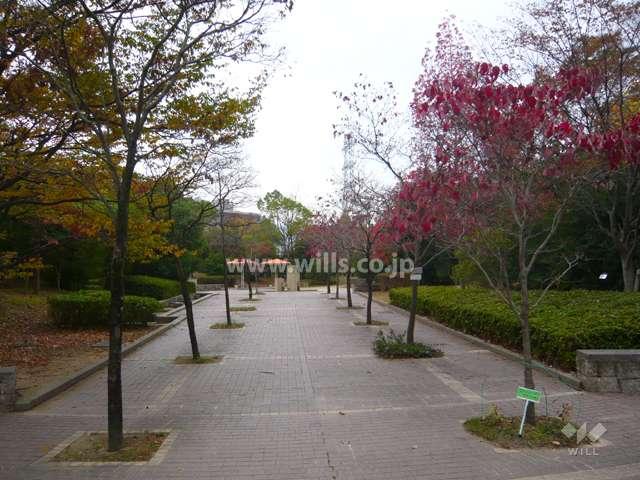 すみれガ丘中央公園8
